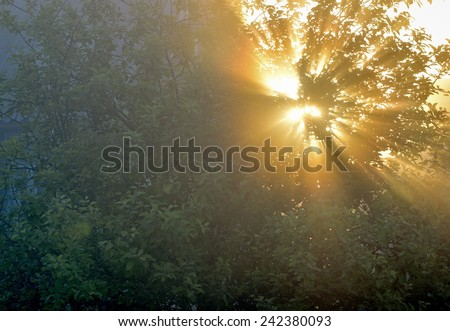 the sun's rays passing through the foliage of the tree  - stock photo