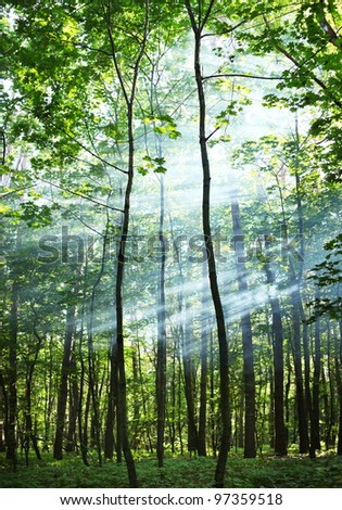 The sun's rays shining through the trees in the forest. - stock photo