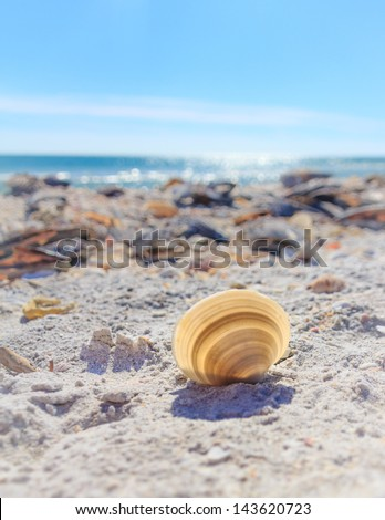 The sun shines through a pale cockle shell left on the beach of Sanibel Island, Florida, USA.  The Gulf of Mexico glows blue in the background. - stock photo
