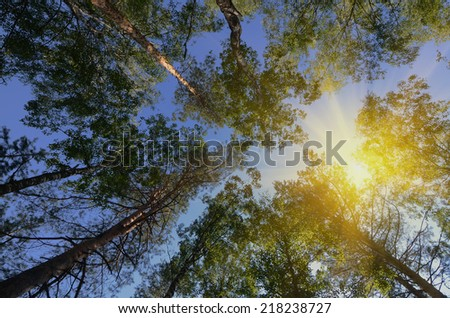 The sun shines through the crown  in summer forest - stock photo