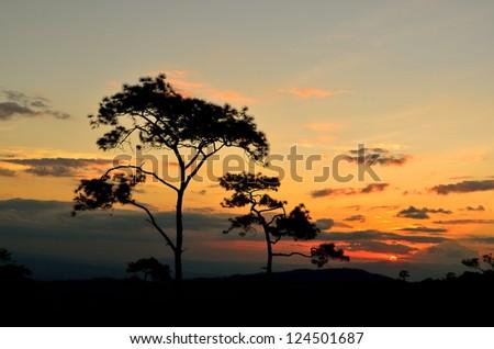 The Sunset of Silhouette Tree Scene 2 - stock photo