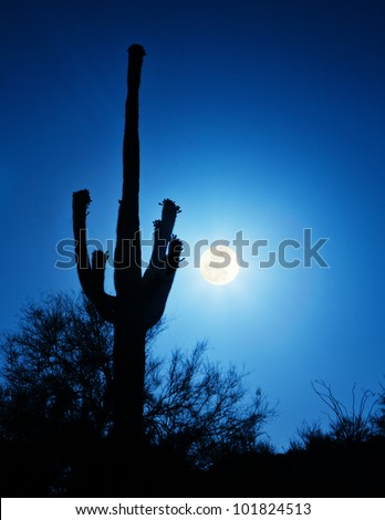 The Super Full Moon on May 5, 2012 with a silhouette of a blooming Saguaro cactus in the foreground. Photograph was taken from the top of South Mountain in Phoenix, Arizona. - stock photo