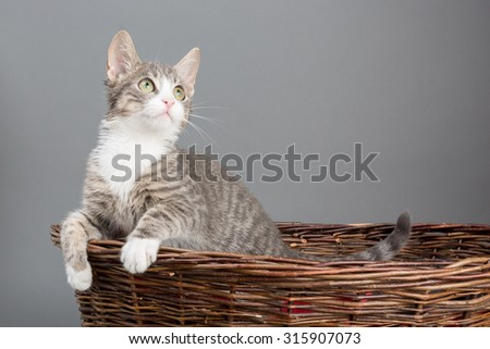 the sweetest kitten - hanging up - stock photo