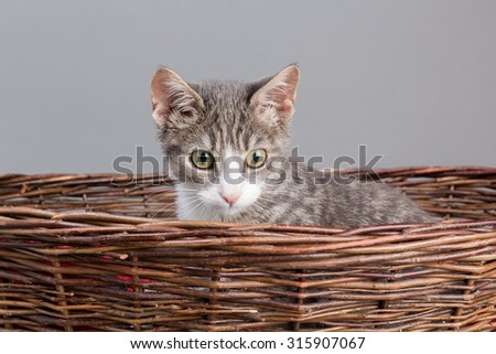 the sweetest kitten - looking out a basket - stock photo