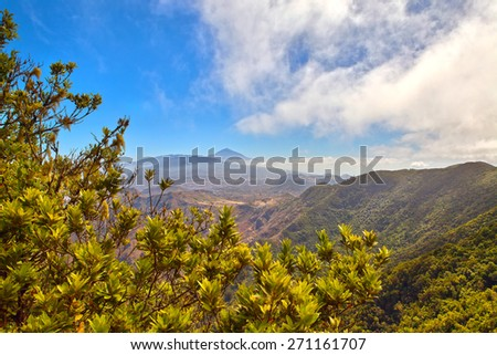 The Teide volcano behind trees in Tenerife, Spain - stock photo