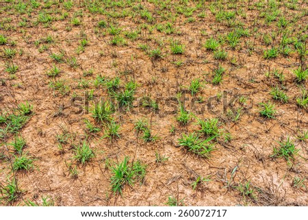 The terrain of bald mountain or grass mountain in Ranong province, Southern Thailand - stock photo