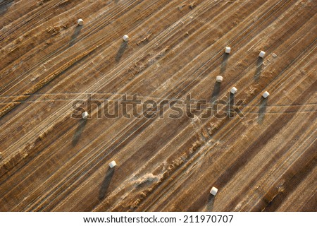 The texture of a wheat field - stock photo