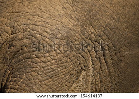 The texture of elephant skin - stock photo