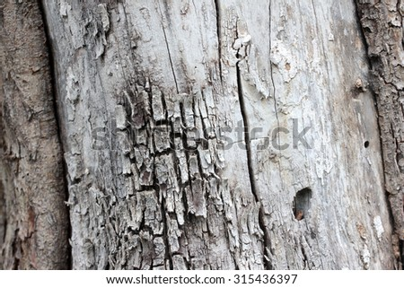 the texture of the bark of an old tree - stock photo