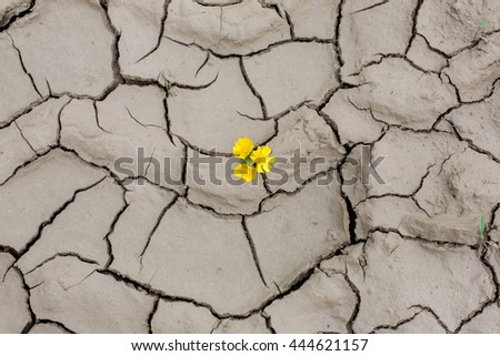 The texture of the dry cracked earth drought and filtering through her yellow flowers. Life and death - stock photo