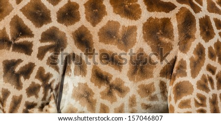 The textured skin of a giraffe - stock photo