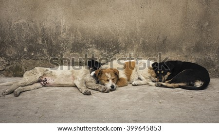 The three little stray dog sleeping along the road  - stock photo
