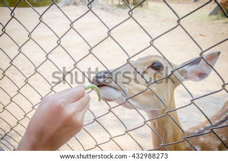the tourist is feeding a fresh food to the deers in zoo. - stock photo