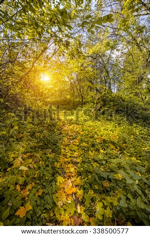 The trail through the carpeted with golden autumn leaves forest into the sunset - stock photo