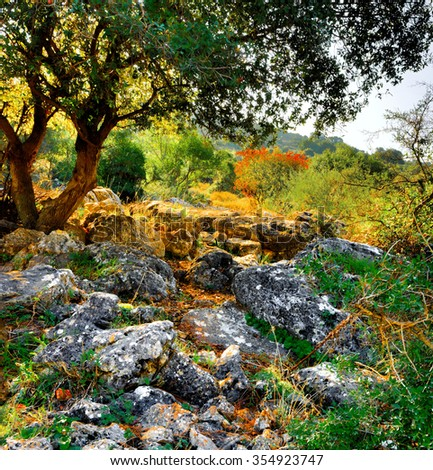 The tree has grown up among the rocks and large stones against a blooming bush and mountains - stock photo