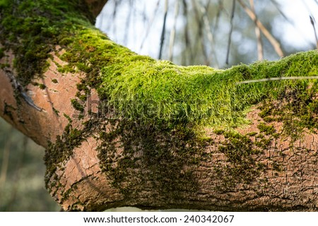 the tree trunk covered with the moss - stock photo