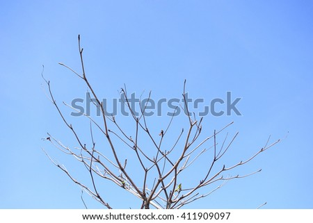 The tree with blue sky background:Close up,select focus with shallow depth of field:ideal use for background. - stock photo