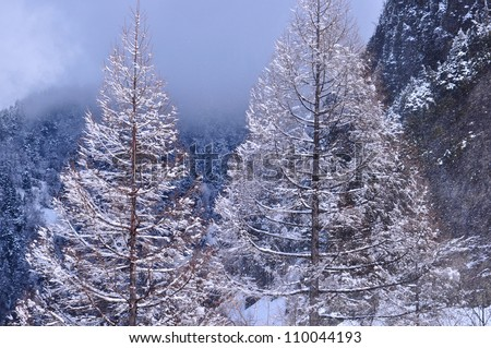 The tree without leaf covering with snow - stock photo
