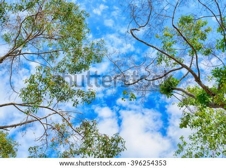 the trees. bottom view and sky with clouds in the forest in spring,Thailand - stock photo