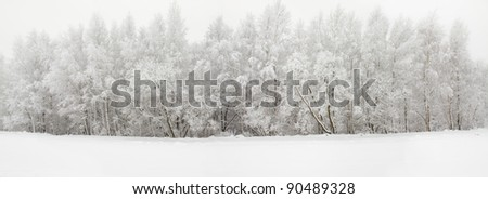The trees growing in wood in a winter season (trees are covered by hoarfrost) - stock photo