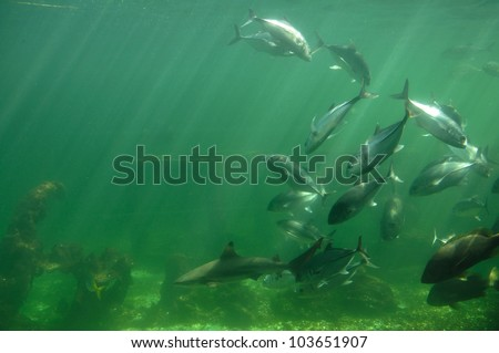 The tropical fish  under the sea. - stock photo