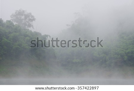 The tropical forest with fog in morning. - stock photo