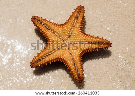 the underside of a red starfish - stock photo