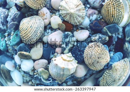 the underwater world of a seabed closeup with various cockleshells and stones in sunlight beams, cool tone - stock photo