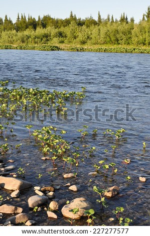 The Ural river. River Northern landscape, clean water and environmental grace. - stock photo