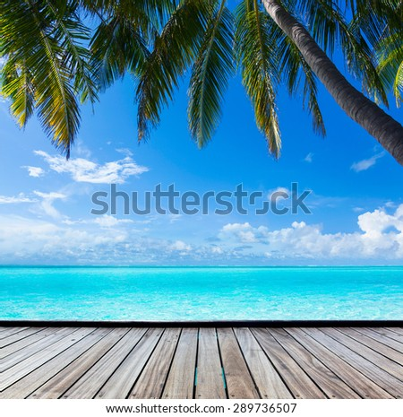 the view from the shore of a palm tree on a tropical turquoise sea - stock photo