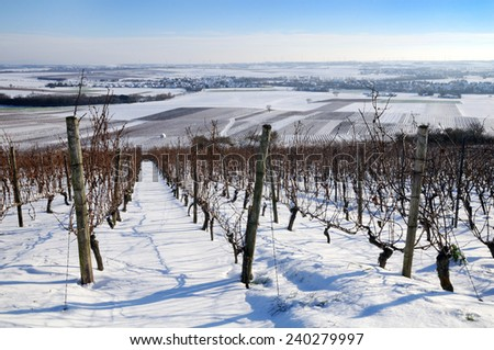 The vineyard in winter - stock photo