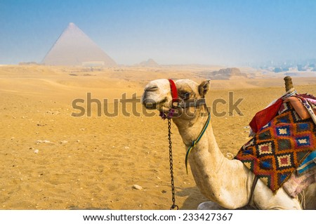 The visiting of Giza Necropolis on camels is the best choice for leisure tourists, who don't want walk in desert sands, Egypt. - stock photo