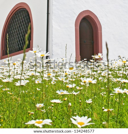 the wall of chapel with camomile field, Alps, Switzerland - stock photo