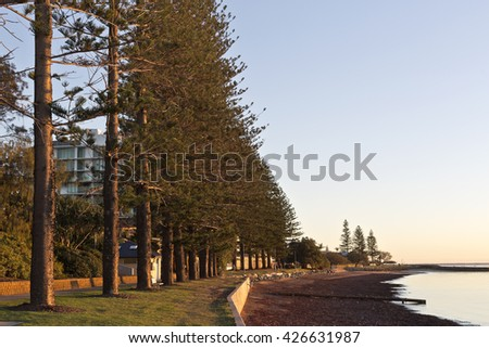 The warm colours of the sunrise over the pine trees of the foreshore Redcliffe, Australia - stock photo