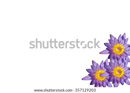the water lilly name is lotus live in the water - stock photo