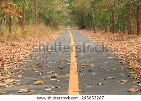 The way in forest, way for jogging/running - stock photo