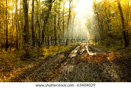 The way in the autumn forest with lights - stock photo