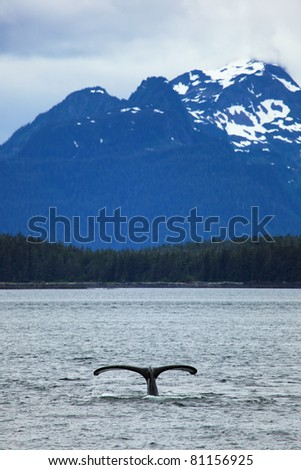 The whale shows the tail on     snow mountains of Alaska background - stock photo