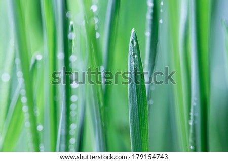 The wheatgrass. - stock photo
