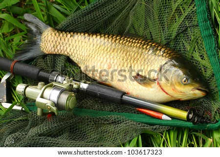 Carp fishing stock photos images pictures shutterstock for White amur fish