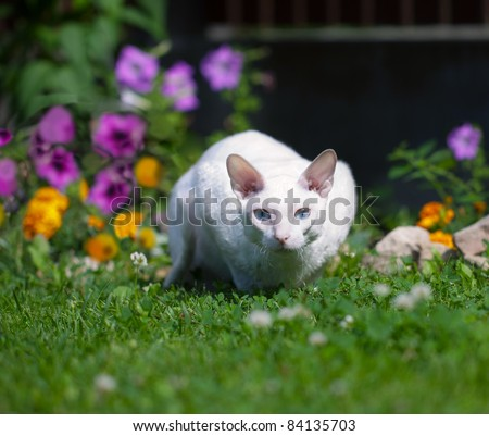 The white cat (with focus on eyes) - stock photo