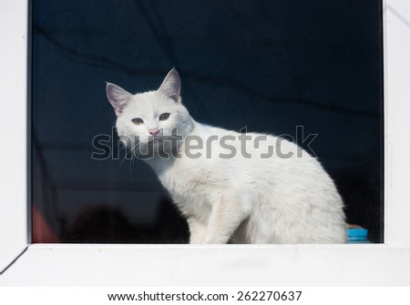 the White curious cat sitting on the window sill and looking at the camera - stock photo