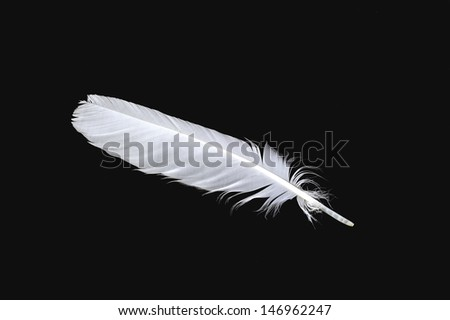 The white feather of a bird isolated on the black - stock photo
