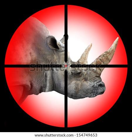 The White Rhinoceros in the Hunter's scope.  - stock photo
