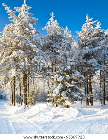 The winter landscape in the frozen forest - stock photo