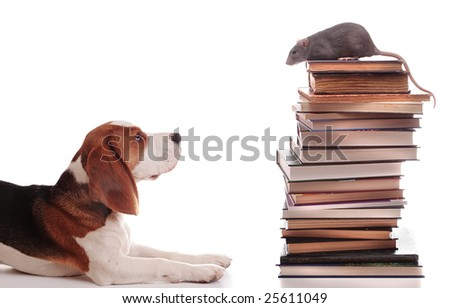 The wise rat lectures to the silly puppy - stock photo
