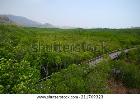 The wooden bridge in mangrove forest with blue sky background. - stock photo