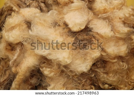 The Wool of the Fleece from a Sheared Sheep. - stock photo