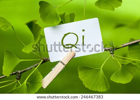 The Word Qi in a Ginkgo Tree - stock photo