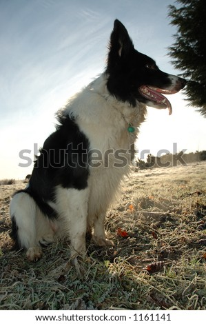 The working dog - stock photo